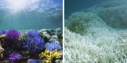 coraux crème solaire